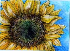 Sunflower in pen and ink with watercolor