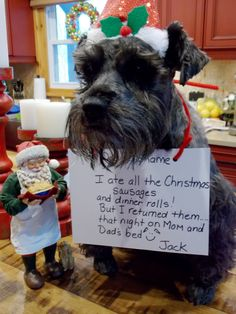 Hi, My name is Jack and I am a blind schnauzer with an excellent sense of smell! So, my owners left me in the car for five minutes with the ...
