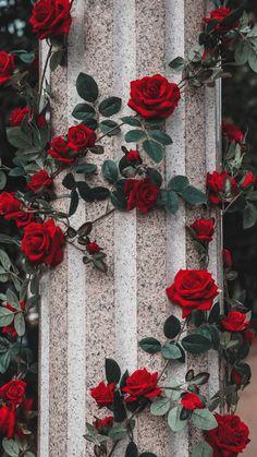 Flower Iphone Wallpaper, Flower Background Wallpaper, Scenery Wallpaper, Cute Wallpaper Backgrounds, Flower Backgrounds, Pretty Wallpapers, Aesthetic Iphone Wallpaper, Flower Wallpaper, Nature Wallpaper