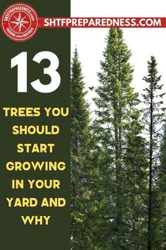 Here is some helpful information about 13 trees that you should start growing in your yard and why. A lot of people are scared to plant trees near their homes so that they won't have to deal with serious ground issues in the future, but the truth is that the benefits of growing trees outweigh the negatives. Take a look here for more information. #trees #goodtrees #plantingtrees #reasonstoplanttrees #whyshouldiplanttrees