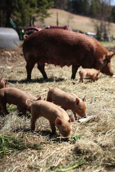 All my coworkers are such swine!! (I work on a hog farm y'all haha)