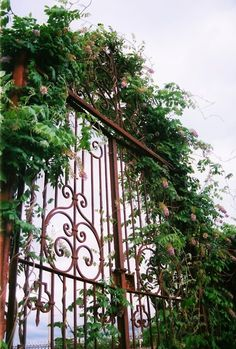 Both garden gate and trellis.