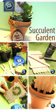 Designer Robyn has a sweet little gift idea for you – a succulent garden! Do you want to have the kids involved in the gift? Have them paint a design or saying on the outside of a plain terracotta pot before you plant the succulents.