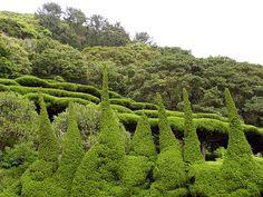 Korea-Geoje-Oedo 4037-06 - Category:Topiary - Wikimedia Commons