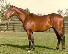 Apalachee(1971)Sired Dance For Donna, Apalachee Honey, Up The Apalachee, K One King, And Pine Tree Lane. Apalachee Is Also The Damsire Of Sprint Champion Artax.