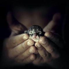 hand-held kitten