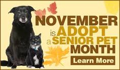 November is Adopt a Senior Pet Month! Make an animals senior years truly golden. Adopt a senior cat or dog today!  See all our adorable, adoptable animals through our website, HumaneSocietyofIredell.org.   Humane Society of Iredell is an independent, no-kill animal rescue in Mooresville, NC (north of Charlotte, exit 36 off I-77).