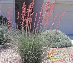 desert landscaping on pinterest deserts landscaping and xeriscaping