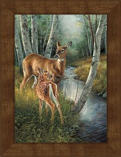 Birch Creek--Whitetail Deer Art Collection | Wild Wings