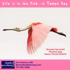 #NativeWildlife on the #Florida #Suncoast at #Tampabay #StPetersburg #Clearwater #Coastalliving #RealEstate