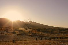 The few evenings I spent here on Fort Huachuca, I was able to lose myself in the sunset.