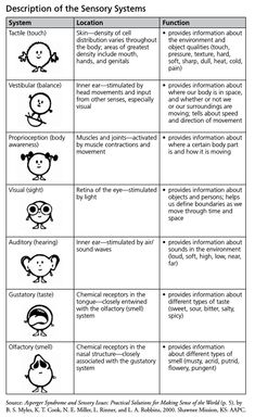 The Sensory Spectrum and Sensory Processing Disorders · Raising An Extraordinary Person Sensory Processing Disorder Symptoms, Sensory Disorder, Auditory Processing, Occupational Therapy Activities, Sensory Therapy, Sensory Diet, Sensory Issues, Autism Sensory, Sensory Activities
