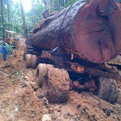 Logging Equipment, Heavy Equipment, Transporter, Semi Trucks, Cool Trucks, Lumberjacks, Big Tree, History Facts, Volvo