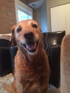 Hey there, got my treat yet?