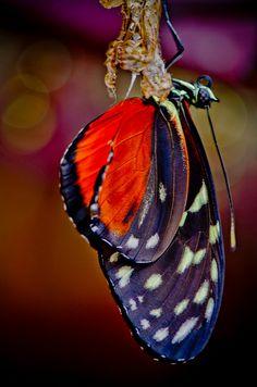 http://www.pinterest.com/kschliesmayer/butterflies/  Coming to life