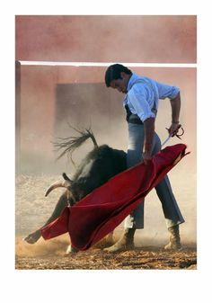 La tienta, siempre como parte fundamental para saborear la bravura del toro a lidiar......