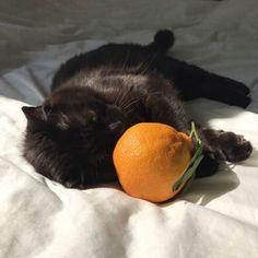 f ø l l ø w ↠ sαvαgvε moηstεr black cat cute aesthetic orange Animals And Pets, Baby Animals, Cute Animals, Jungle Animals, I Love Cats, Cool Cats, Cat Ideas, Jandy Nelson, Cutest Cats Ever