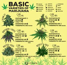 Do you know all the varieties of Marijuana? Discover the basic ones on 4.20!