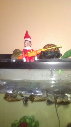 Day 2: Buddy went fishing in our turtle tank..turtle soup anyone?