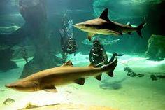 Zoo Aquarium_Madrid