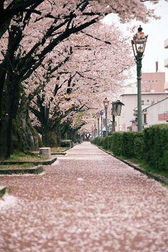 한국 벗꽃   Cherry blossoms carpet by kosuke fujimura Read more at: http://www.beautifullife.info/art-works/wonderful-cherry-blossom-season/