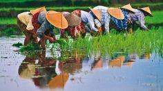 A dobradinha Vietnã e Camboja foram dois destinos incríveis que estive na Ásia. Muita história, uma cultura riquíssima, artesanato maravilhoso e comida excepcional. Venham conhecer um pouco dessa viagem!!