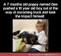 Dog is a real hero