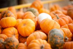 Harvest 101: How to Grow Pumpkins...they are really easy and fun to grow.   Especially the little ones and gourdes.