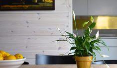 Liberon Bloom Paneelivaha - Colornova Oy Planter Pots, Bloom, Home, Ad Home, Homes, Haus, Houses