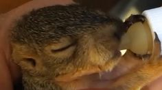 Disabled Squirrel's Mom Is Helping Her Get Back On Her Feet