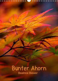 Bunter Ahorn - CALVENDO Kalender von Beatrice Biewer