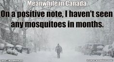 Super Funny Life Quotes For Women Hilarious Jokes 66 Ideas Canadian Memes, Canadian Things, Canadian History, Canadian Humour, Canada Funny, Canada Eh, Canada Jokes, Funny Quotes About Life, Life Quotes