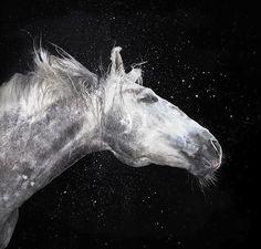 اكبر موسوعة صور خيول . اروع صور الخيول العربيه . صور خيول . اجمل صور خيول . صور حصان - منتديات ستوب
