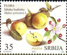 Stamp: Apple (Jabuka budimka) - Malus Sylvestris L. (Serbia) (Flora - Fruits) Mi:RS 611