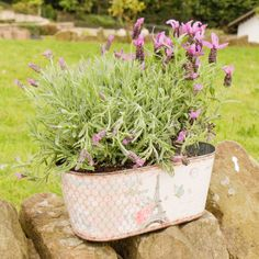 This large windowsill planter is made from zinc and features a vintage style Parisian postcard design featuring a butterfly and roses print perfect for the garden. The print features a distressed edging perfect for adding a touch of shabby chic design to your home or garden. This stylish windowsill planter is the perfect way to showcase your favourite flowers and plants and makes an ideal gift for any gardener.
