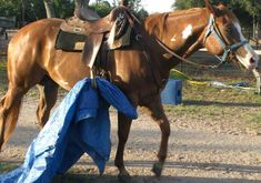 Flying M Ranch Texas Hill Country, Despooking your horse