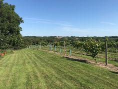 South Vineyard west side 2018