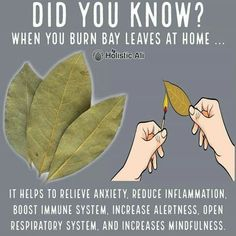Do you burn bay leaves❓❓❓ Health Hacks! ➡️ IG 👉🏽 Do you burn bay leaves❓❓❓ Health Hacks! Burning Bay Leaves at home is healthy 😁 I love burning bay leaves. Bay leaves have anti-anxiety properties. Natural Health Remedies, Natural Cures, Natural Healing, Natural Life, Herbal Remedies, Flu Remedies, Natural Treatments, Healing Herbs, Holistic Healing