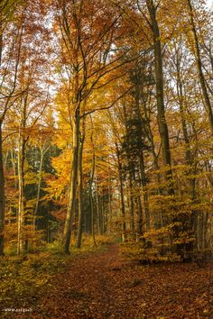 Autumn | #forest #autumncolors #heitersberg  #aargau #Switzerland - take a look at my photoblog under www.raegi.ch or with a click on the pin Nature View, Switzerland, Country Roads, Urban, Instagram, Plants, Autumn Forest, Colors, Woodland Forest