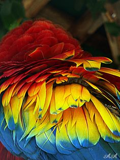 Feathers, Ania Archer Photography, Parrot, Birds,