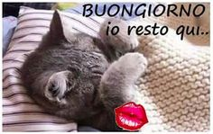 Good Morning Good Night, Day For Night, Chillout Zone, Italian Memes, Good Mood, The Hobbit, Animals And Pets, Funny Cats, Cristiani