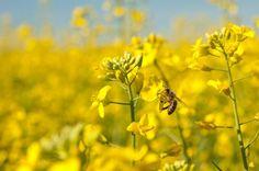 Debatt   Vi måste få stopp på bidöden   Lantbruk & Skogsland