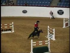 2010 American Miniature Horse Champ Jumper - YouTube this is so cute