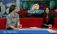 What you can expect at Zoo Year's Eve Watch News, Arts And Entertainment, Calgary, The Help, Eve, Entertaining, Funny