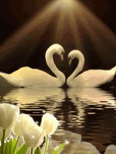 beautiful animated gif birds | HeartSwans.gif Heart Swans image by Lee1959