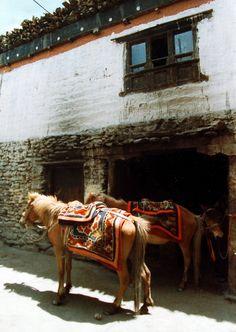 Tibet, saddle blankets, wool