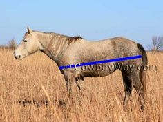 How to estimate horse weight. Knowing your horse's weight can be very helpful for calculating feed rations, knowing how much de-wormer to administer, and more. There are several ways commonly used to estimate a horse's weight. We show you two common methods in text and photos. We performed both methods ourselves on three different horses, then compared the estimated weights to actual weights on a livestock scale.