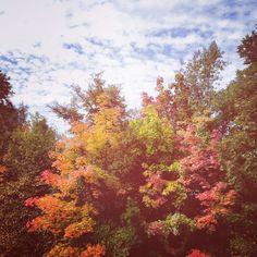 Herbstfarben auch in schön!  #berlin #wedding #igersberlin #herbst #autumn #urban #fb #ig_berlin #humboldthain #nature