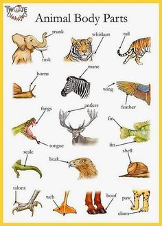 Animal body parts English vocabulary - Trunk, shell, whiskers etc English Time, English Fun, English Study, English Class, English Words, English Lessons, English Grammar, Learn English, Improve English