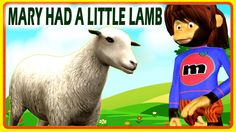 Nursery Rhymes with Animal Cartoons | Mary Had A Little Lamb Rhymes for ...